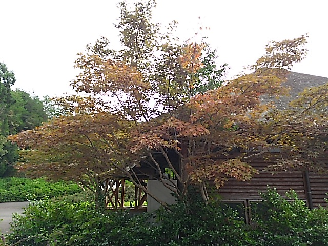 秋色。。。